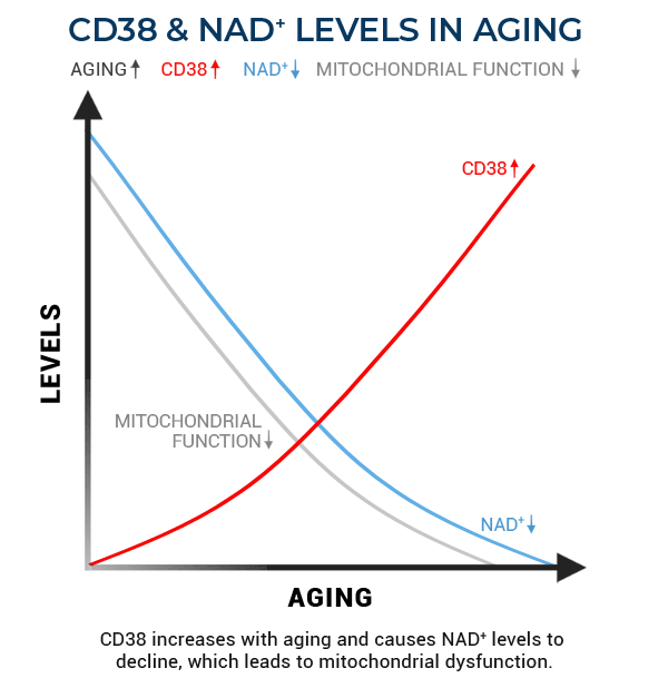 CD38 and NAD levels