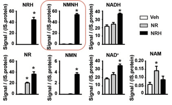 NRH increases cellular NMN and NMNH level (Giroud-Gerbetant et al. 2019)