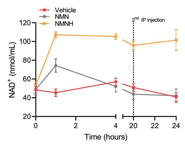 IP injection of 250 mg/kg NMN(H) to mice (Zapata-Pérez et al. 2019)